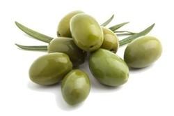 """Oliven grün mit Kern DOP """"Aperitivo"""" 1,7 kg"""