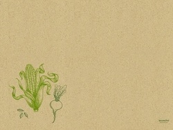 graspapier_tischset_30_x_40_cm_-_veggies