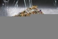 Jerseybrie mit Blütenzauber ca 250 g