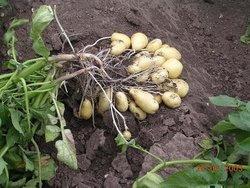 VALDIVIA Salaterdäpfel 10 kg